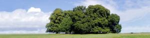 Hartmann Bestattungen - Grabpflege Inh. Sabine Hartmann